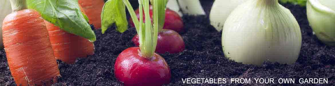 vegetables-from-your-own-garden